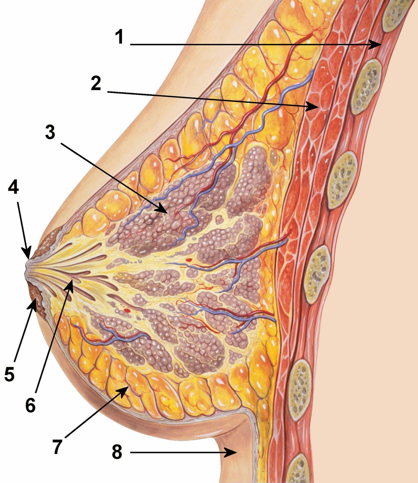Фото жіночої вагіни і груді 14 фотография